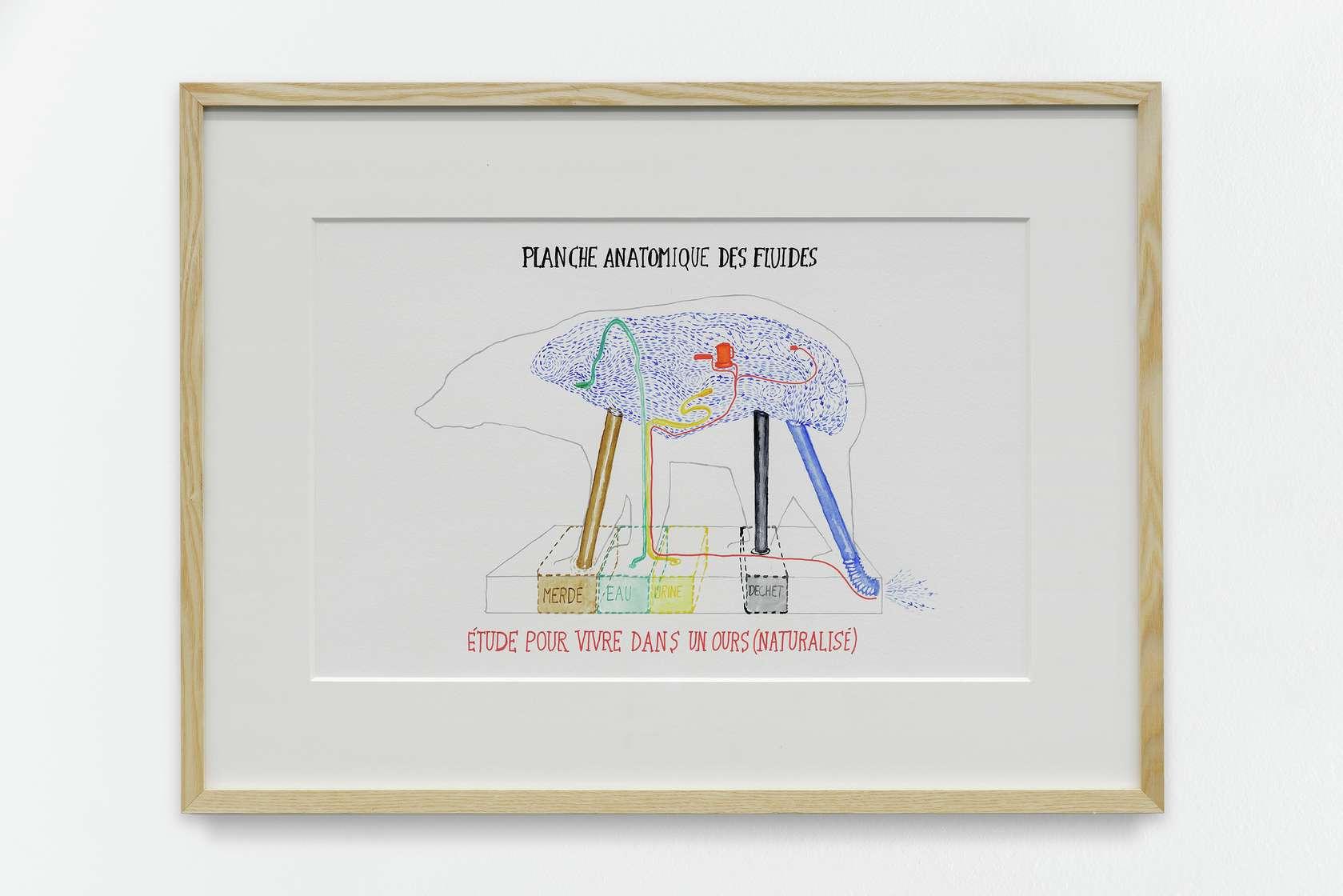 Abraham Poincheval, Étude pour vivre dans un ours (naturalisé), 2014 Crayon et aquarelle sur papier32 x 49 cm / 12 5/8 x 19 2/8 inches | 50 x 69 cm / 19 5/8 x 27 1/8 inches (encadré/framed)