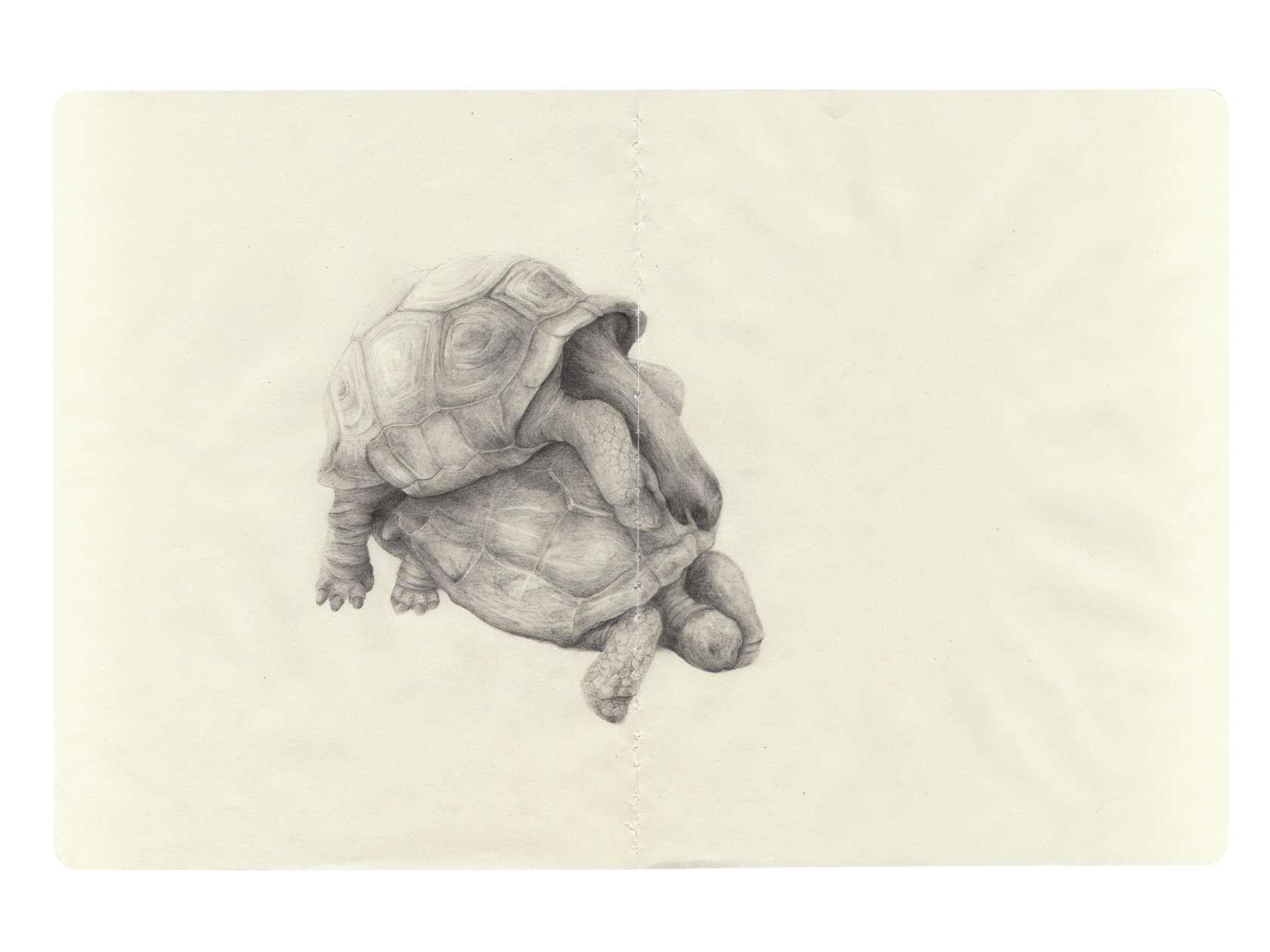 Laurent Le Deunff, Rut  (tortues), 2011 Crayon sur papier Moleskine25 × 38 cm / 9 7/8 × 15  in.