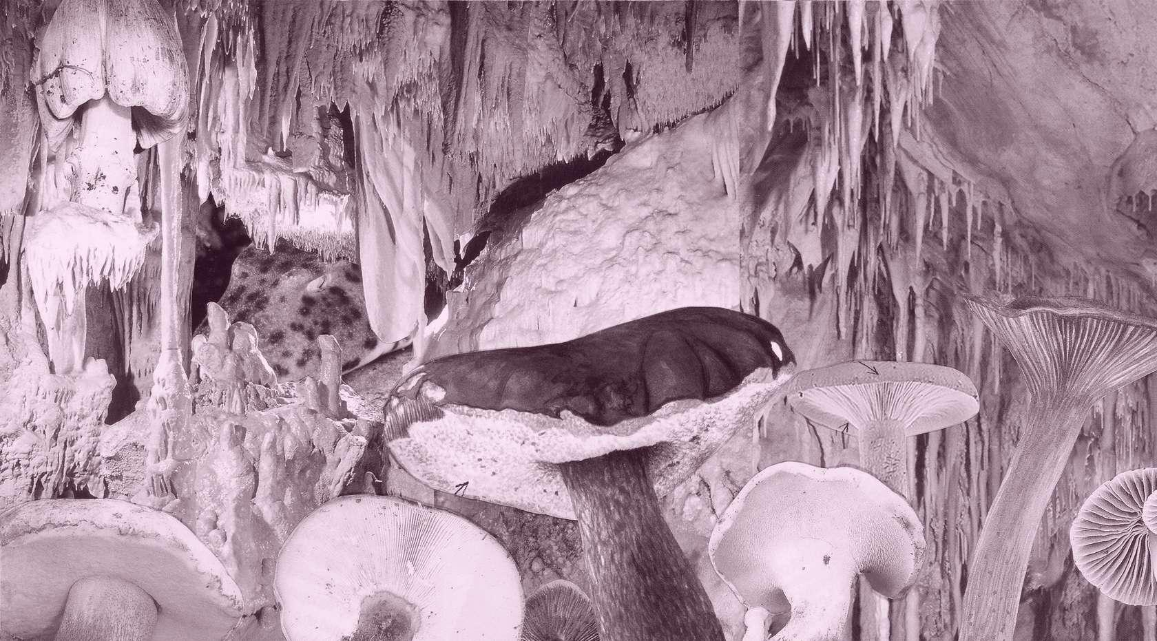Laurent Le Deunff, Requin des Bois III, 2015 Tirage pigmentaire sur papier Hahnemühle110 × 198 cm / 43 2/8 × 78  in.