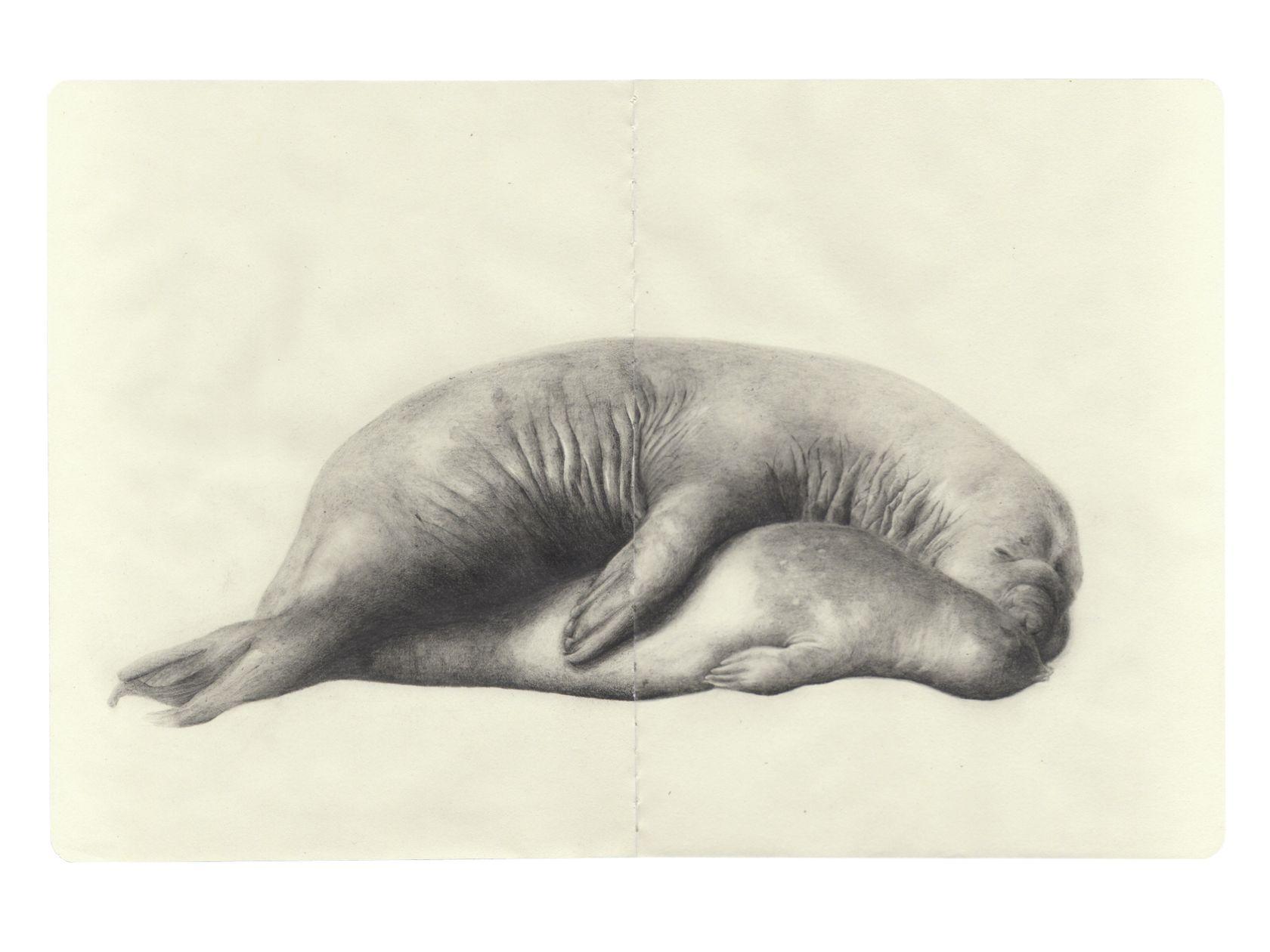 Laurent Le Deunff, Rut (éléphants de mer), 2011 Crayon sur papier Moleskine25 × 38 cm / 9 7/8 × 15  in.