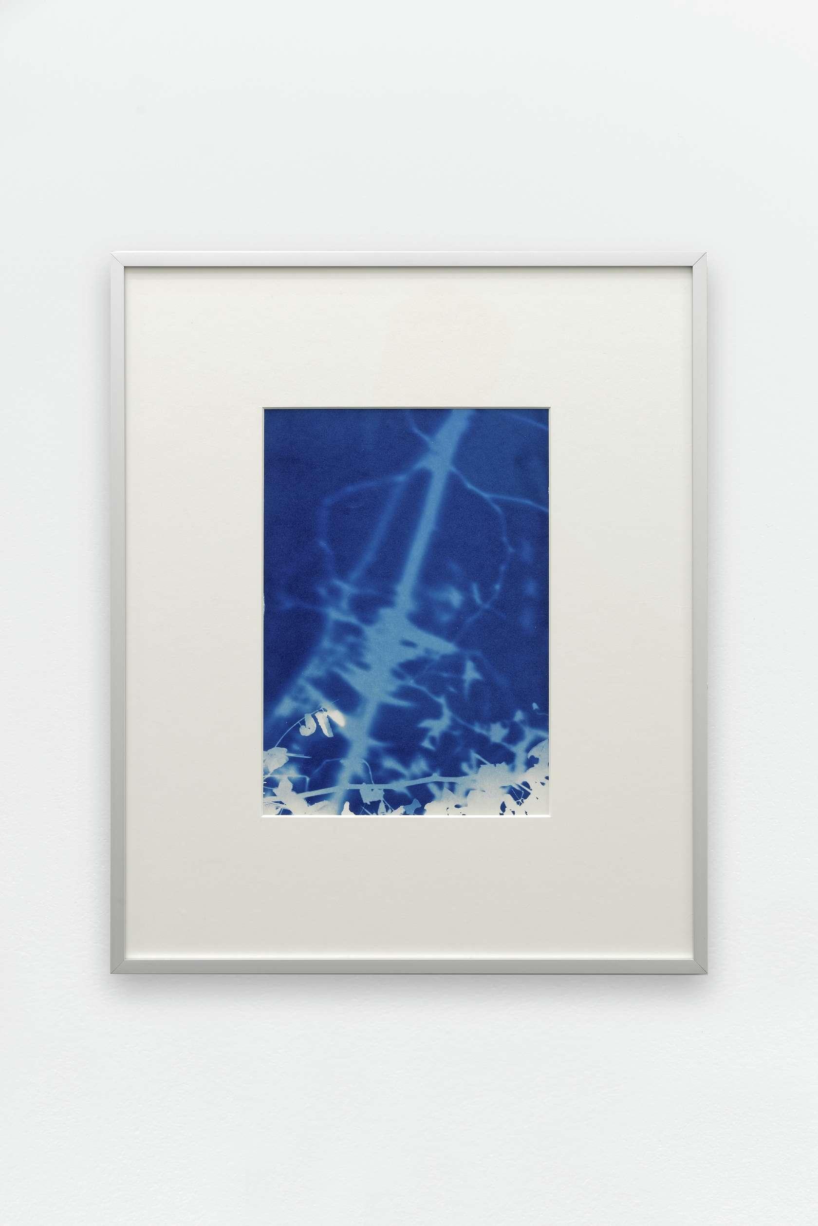 documentation céline duval, Les éphémères, CZ - 08/2015, 2015 Cyanotype sur papier27.5 × 19.5 cm / 10 7/8 × 7 5/8 in.
