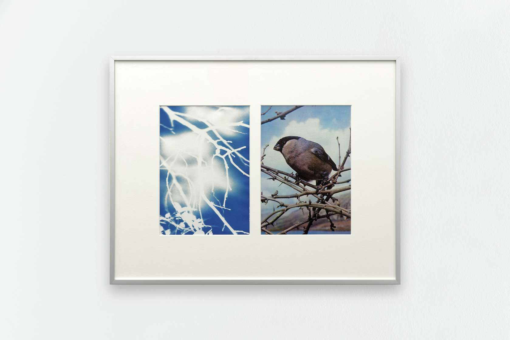documentation céline duval, Tilt, bain de soleil, 2015 Cyanotype sur papier et impression offset sur papier (page de livre)